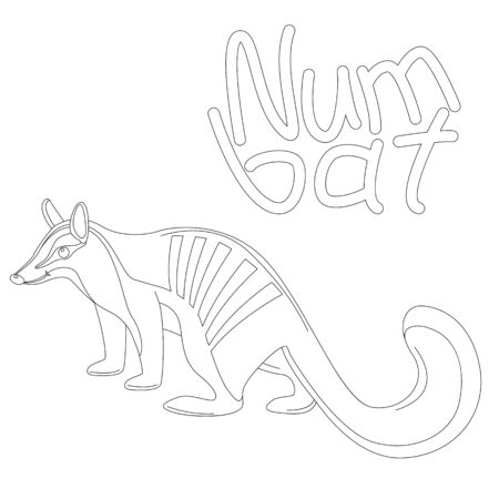 numbat , vector illustration,lining draw, profile side