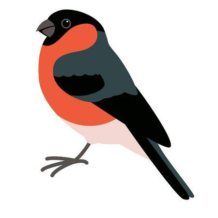 bullfinch bird, vector illustration, flat style, profile side