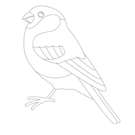 bullfinch bird, vector illustration, lining draw, profile side