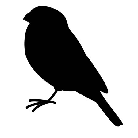 bullfinch bird, vector illustration,  black silhouette, profile side 일러스트