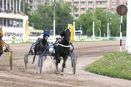 Beautiful horse trotting very fast at a harness horse race Reklamní fotografie