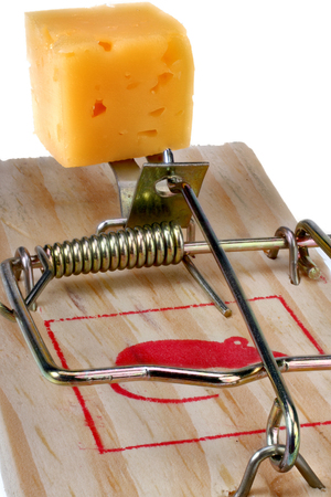 exterminate: Cube the cheese in a mousetrap isolated on white with Clipping Path