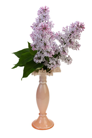 Bouquet of lilac in a vase on white background with Clipping Path. Reklamní fotografie