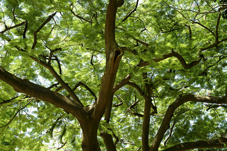 twing: Big tree on color green background with green leafs