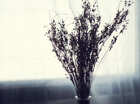 horticultural: dried Flowers isolated on white background Stock Photo