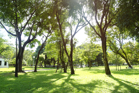 green grass field in big city park Stock Photo