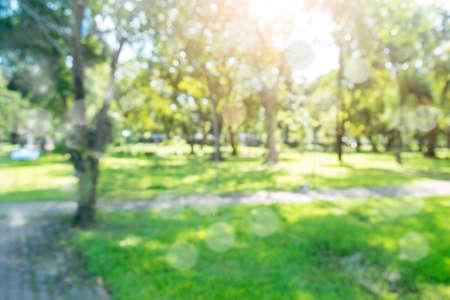 Defocused bokeh background of garden trees in sunny day