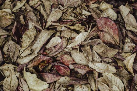 Cloae-up leaf texture. Leaf texture background