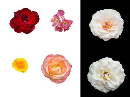 Summer flowers with flower isolated on white background