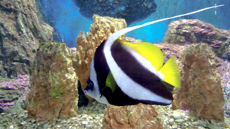 latent: beautiful underwater  and tropical fish.