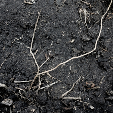 black soil: Black soil with tree root texture background Stock Photo