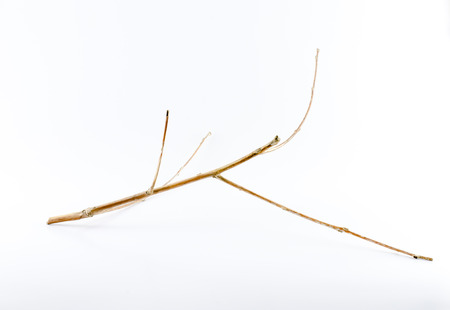 Small dry branch on white background with shadow  photo