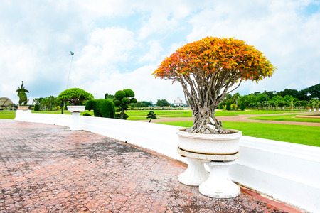 Orange bonsai in park,landscape view photo