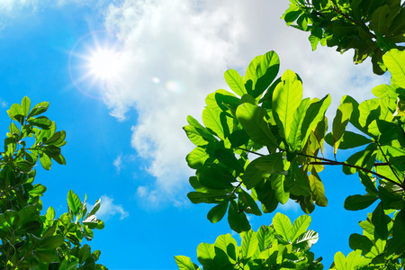 looking through: looking up to Leaf with blue sky and sun beam light.