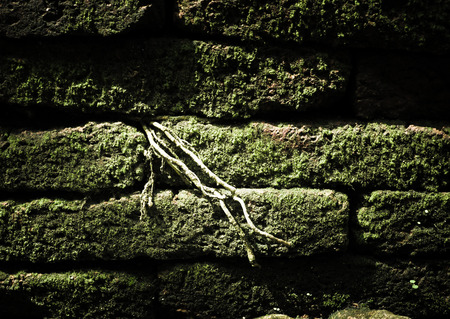 porous brick: Filtered : Brick stone with green moss and tree root grow between cleft of brick block.