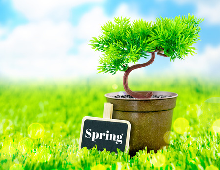 flowerpot and spring word on blackboard on green grass with blue sky,Spring Season. photo