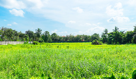 disorderly: Landscape view of deserted land with green grass and trees