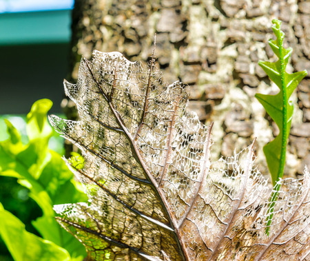 shadowy: Dry decay brown leaf,texture