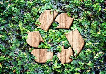 Eco concept: Houten textuur Recycle pictogram op groene bladeren muur.