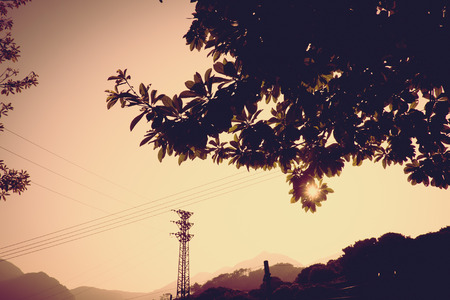 side of the road: Vintage filter : silhouette of sunset scene with tree at side road.