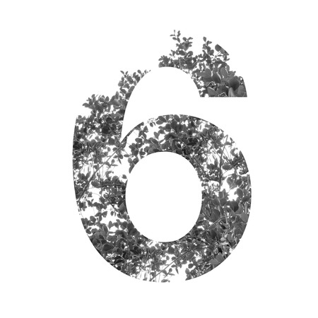 number 6: six Number double exposure with black and white leaves isolated on white background,clipping path. Stock Photo