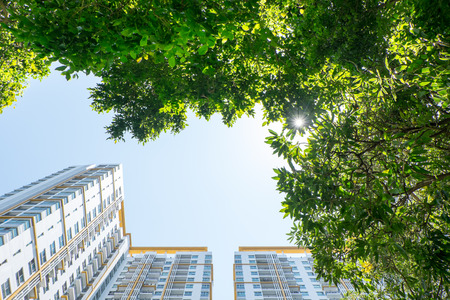 low glass: Looking up at tree and building,real estate vision concept.