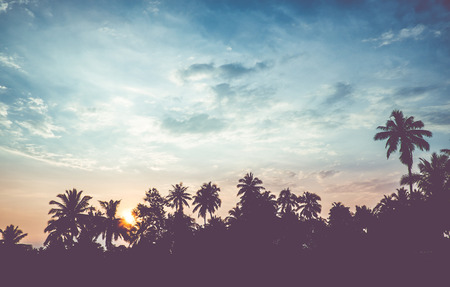 vintage filter : silhouette landscape of coconut tree ,tropical sunset scene in Thailand. Stock Photo