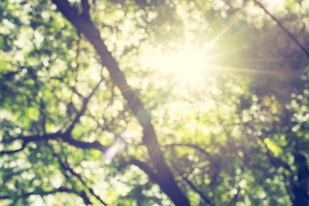 Blur background : Looking up at green tree with sun burst.