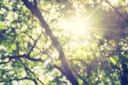 Desenfoque de fondo: Mirando hacia arriba en el árbol verde con la explosión sol. Foto de archivo - 41205295