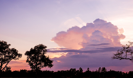 big behind: Landscape view of sunset behind big cloud with tree at foreground in evening.