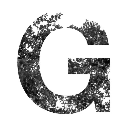 letter g: G letter double exposure with black and white leaves isolated on white background,clipping path.