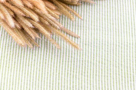 tablecloth: Close up dry Pennisetum flower on table with green strip tablecloth. Stock Photo