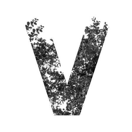 v alphabet: V letter double exposure with black and white leaves isolated on white background
