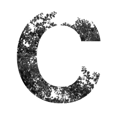 white letters: C letter double exposure with black and white leaves isolated on white background