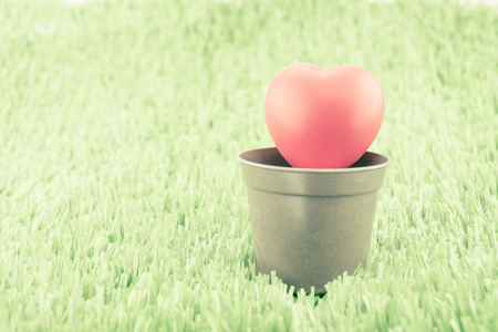 flower in pot: Vintage filter ,Red heart on flower pot at green field,spring concept.