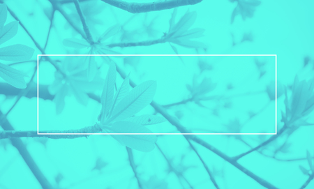 duo tone: Empty white frame on blue Duotone of leaf on tree background, Mock up for adding your text.