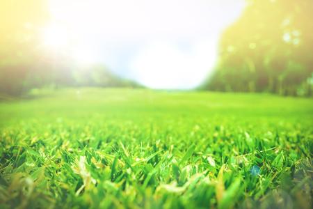 ensolarado: Feche acima do campo de grama verde com fundo do parque borr