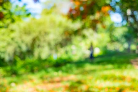 bokeh lights: Blurred background : Green tree in park ,natural backdrop.