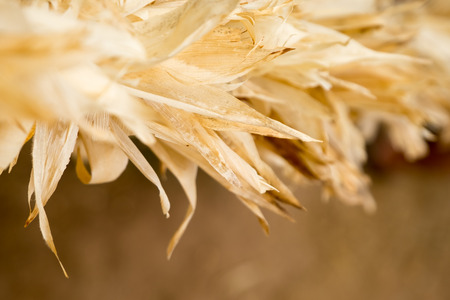 husks: Close up at corn husks at farm.