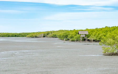 mangrove forest: Landscape view of Mangrove forest and blue sky, Nature outdoor.