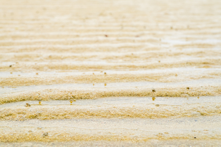 close up view: Close up wet beach sand texture background in perspective view, Summer holiday.