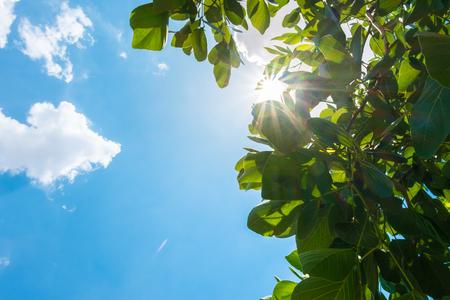 태양을 바라 보는 좋은 날씨 하루에 구름과 푸른 하늘 나무 잎 behid 버스트.