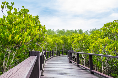 Wood boardwalk between Mangrove forest and blue sky ,Study natural trails,aerial view. Фото со стока