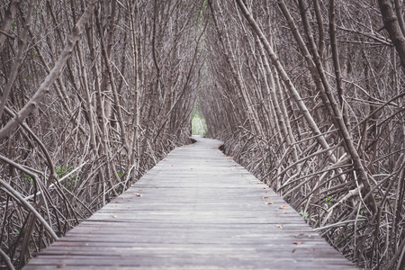 Wood boardwalk between Mangrove forest,Study nature trails,Low angle view, Vintage filtered.