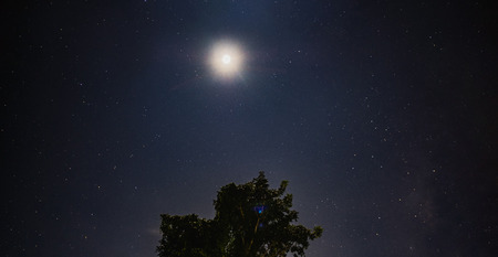 Moon shine in the night sky with star over tree Standard-Bild - 113445016