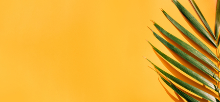 Palm leaf with hard shadow on yellow summer wall background in sunlight in holiday vacation.banner copy space for display of design. 版權商用圖片 - 122904961