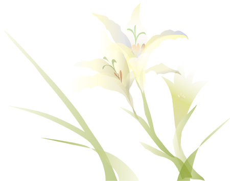 white lily  イラスト・ベクター素材