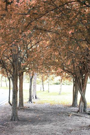 sylvan: Trees give sylvan.