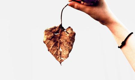 hojas secas: Hojas secas Foto de archivo