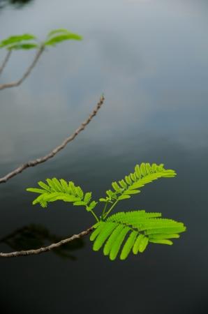 composure: natura